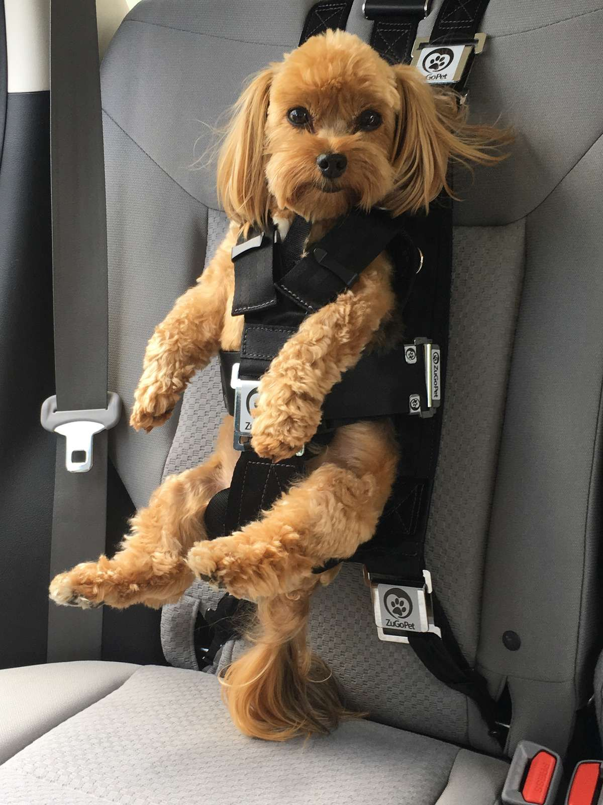 The Rocketeer Pack Is A Patented Pet Safety Car Seat Designed To Protect Your Dog In Case Of An Accident Multifunctional Works As