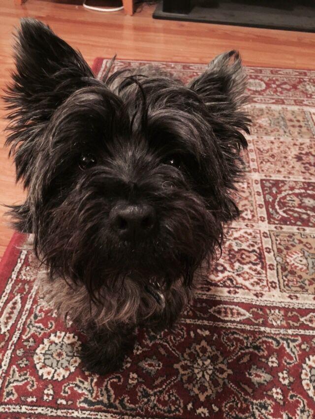 42053b5b6035 Benji - looks just like Max!