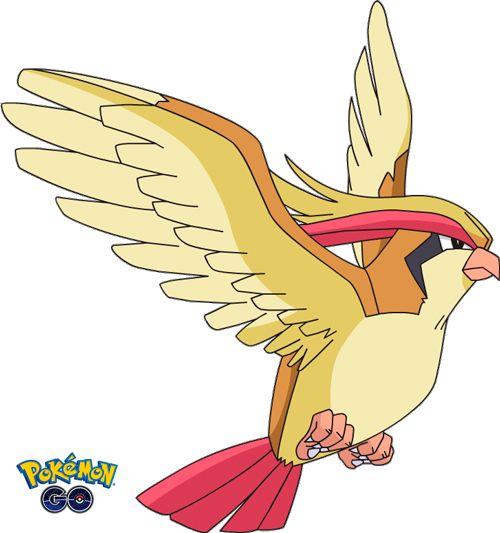 Pidgeot 18 de Pokémon Go