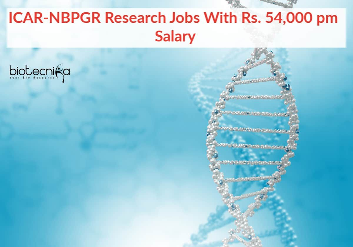 Icarnbpgr research jobs with rs 54000 pm salary in 2020