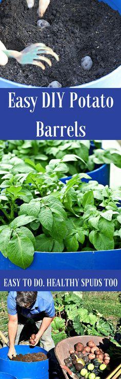 Easy DIY Potato Barrels | Potato barrel, Container ...
