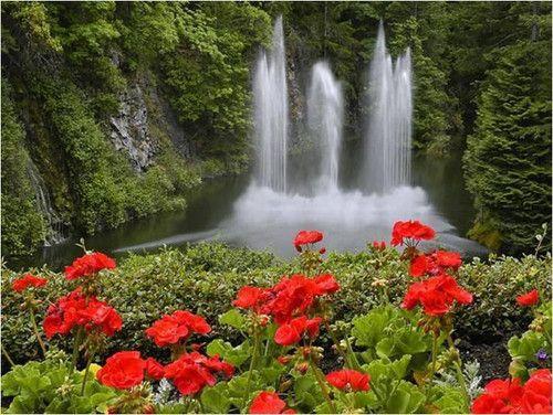 preciosas cascadas con flores rojas manchego_07 fotolog - Fotos De Flores Preciosas