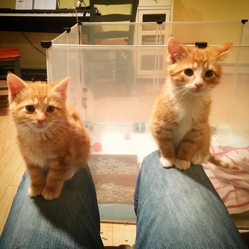 2 Shy Kitten Sisters Learn To Trust And Love From Blind Ginger Cat Love Meow Cats Ginger Cats Kitten