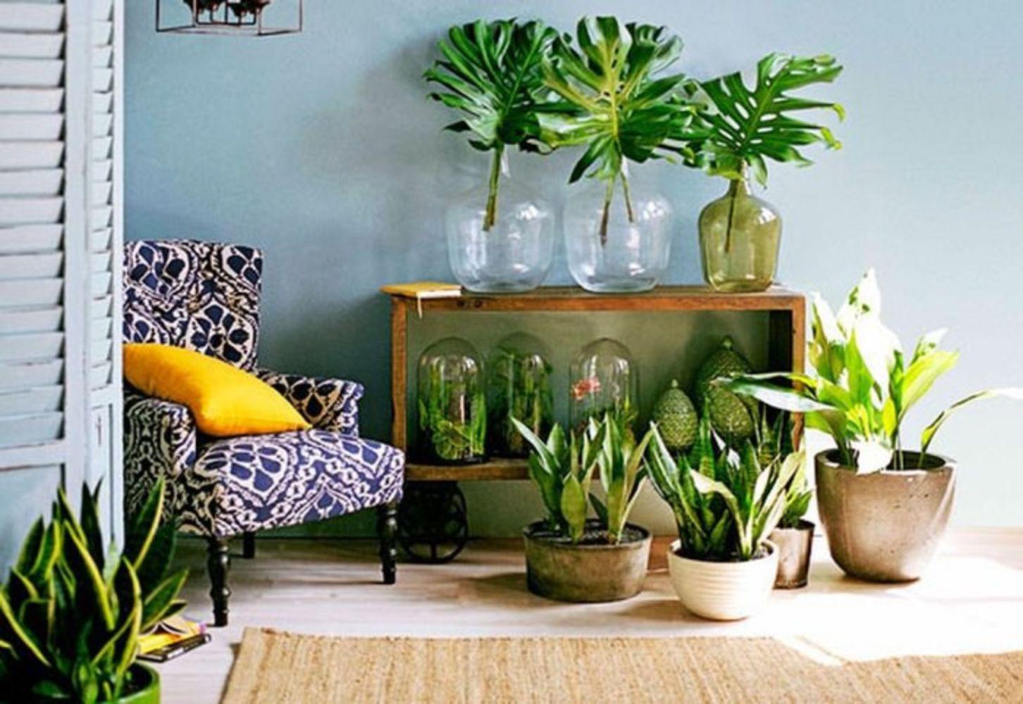 inside plants decoration - 735×506