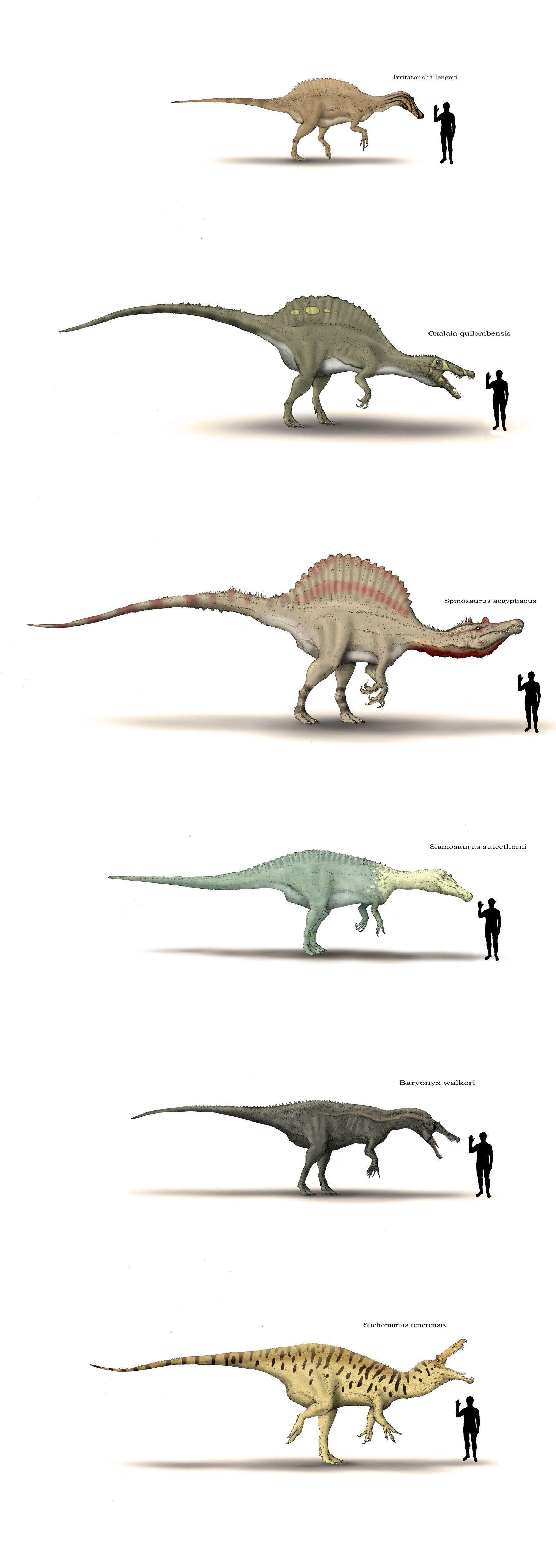 nous sommes si peu de choses dinosaures pinterest nous sommes dinosaures et pr histoire. Black Bedroom Furniture Sets. Home Design Ideas
