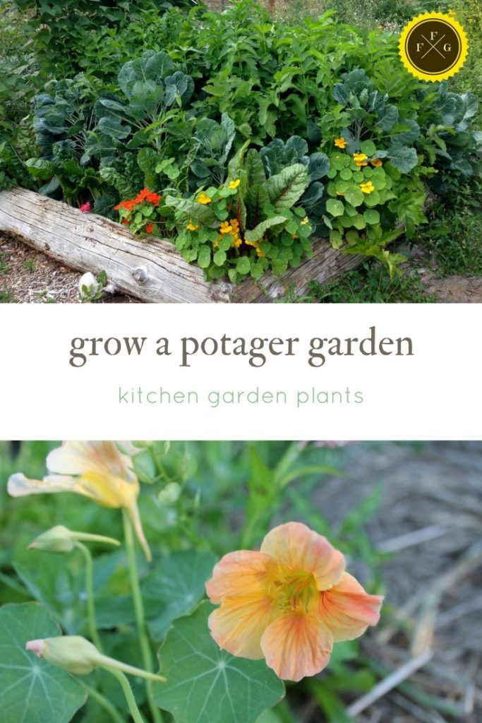 Kitchen Garden Designs, Plans + Layouts | Family Food Garden ... on food salads, food herbs, food pests, office plans, food forest plans, food winter, xeriscape plans, playground plans, food business plans, food weather, food trees, food lesson plans, backyard plans, food blogging, permaculture plans, food gardening, food soup,