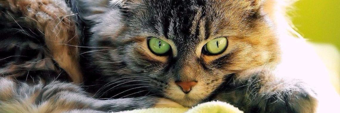 Ik stel jullie voor, mijn eerste kat sinds 2008, ik heb ze gekregen van een buur, ze was verwilderd en leefde in het bos. Ok ik neem deze aan, wat een uitdaging. Twee maanden heb daar serieu