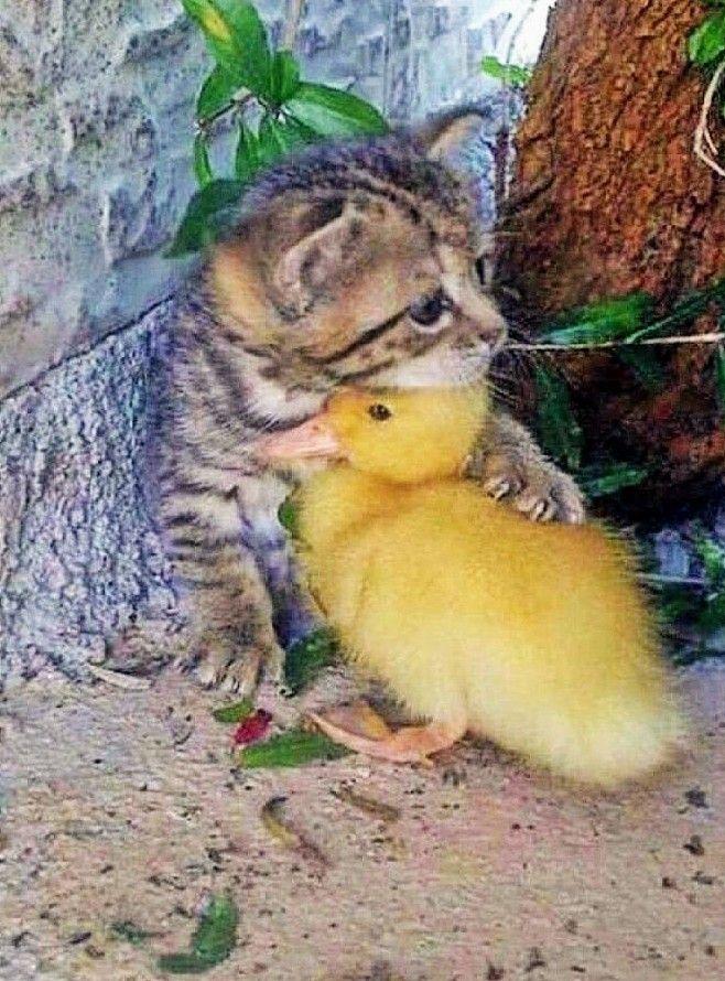Beautiful Animals Friendship Animals Beautiful Cute Baby
