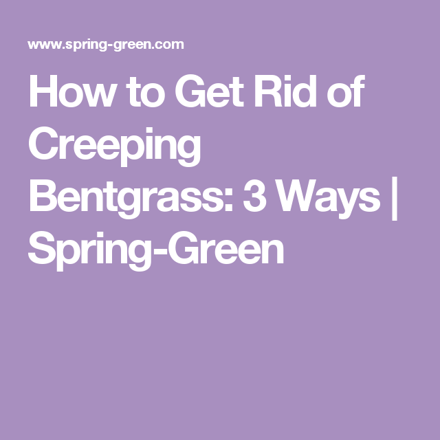 How To Get Rid Of Creeping Bentgr 3 Ways Spring Green