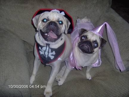 Pugslie & Marley = Love