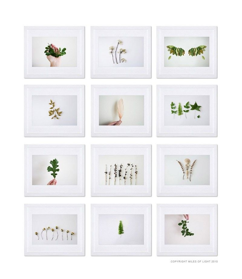 This Is Pretty For A Bathroom Leafs Plant Photography White Background Photography Plants