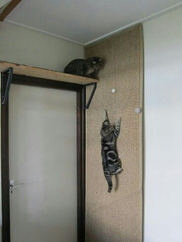 Cat Climbing Wall Would Be Easy To Use An Old Rug Or Some Left Over Carpet Cat Room Animal Room Pet Furniture