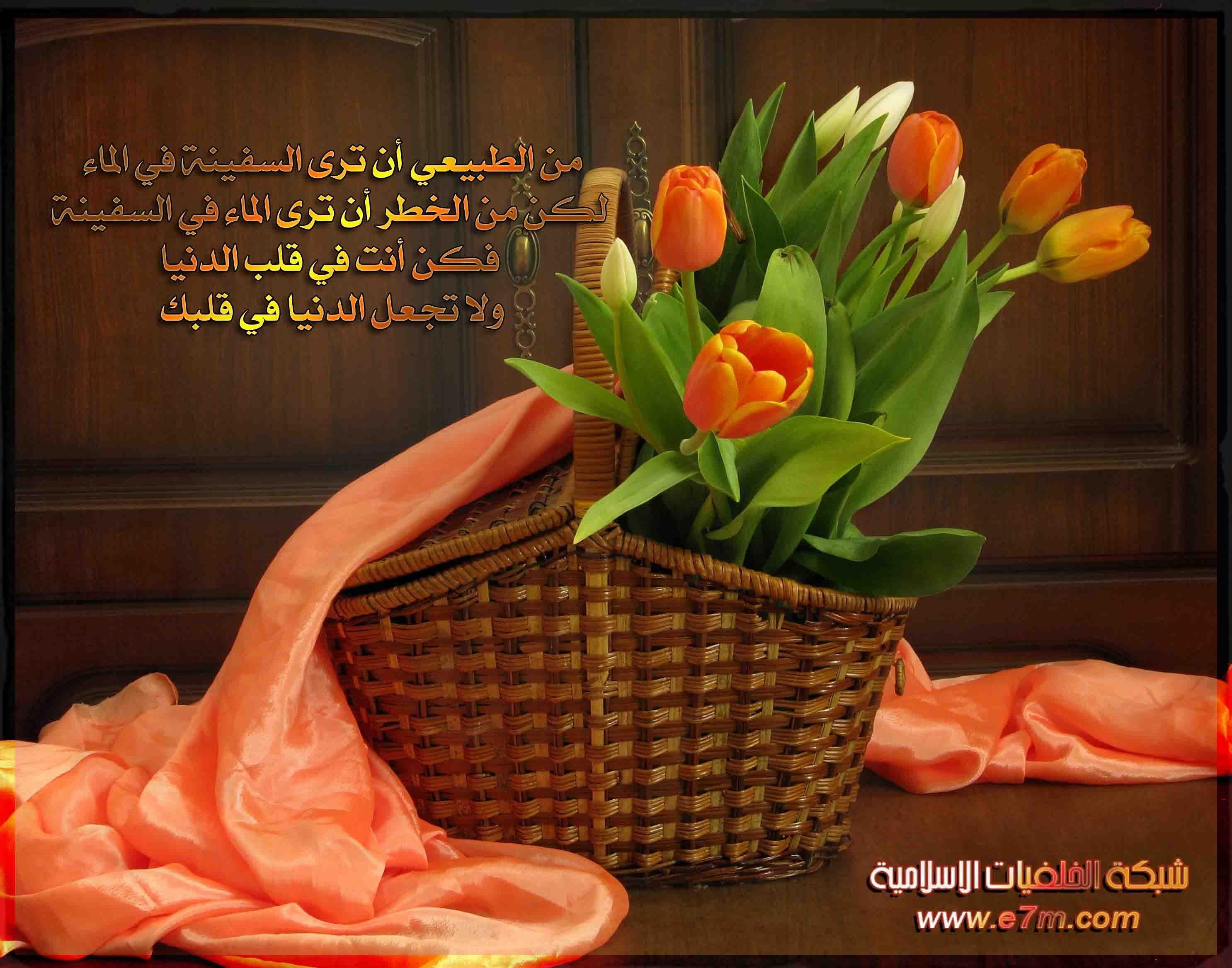 تلاوة رائعة سورة الملك الشيخ علي جابر Www Qoranet Net Orange Tulips Flowers Bouquet Picnic Basket