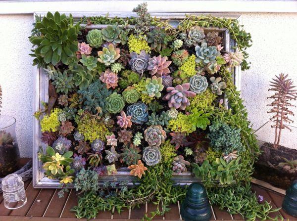 Amazing vertical garden with succulents