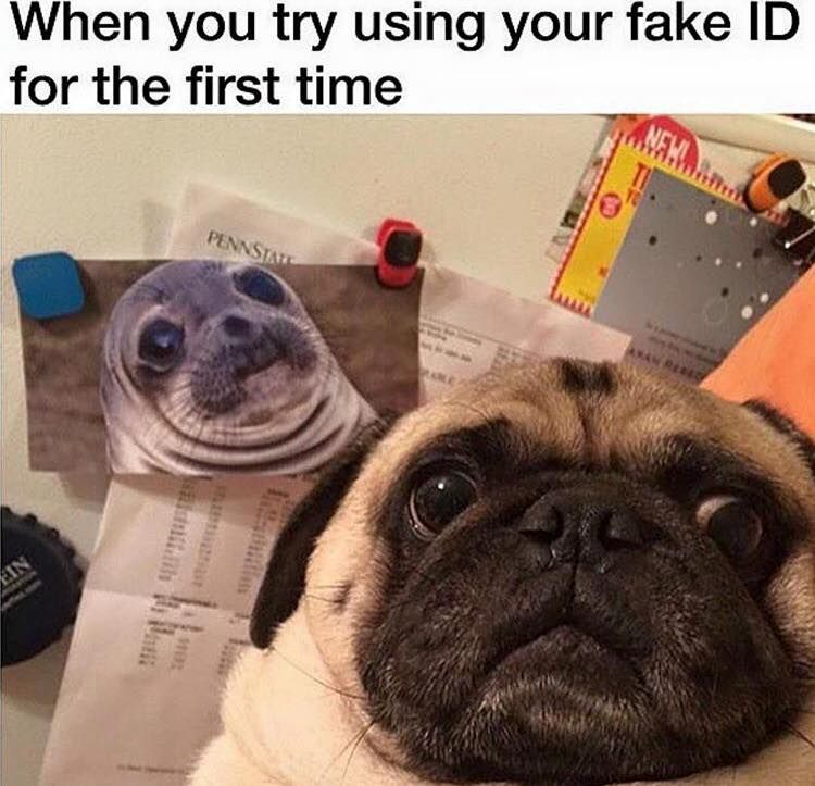 funny pug dog meme lol no disapointment here pinte