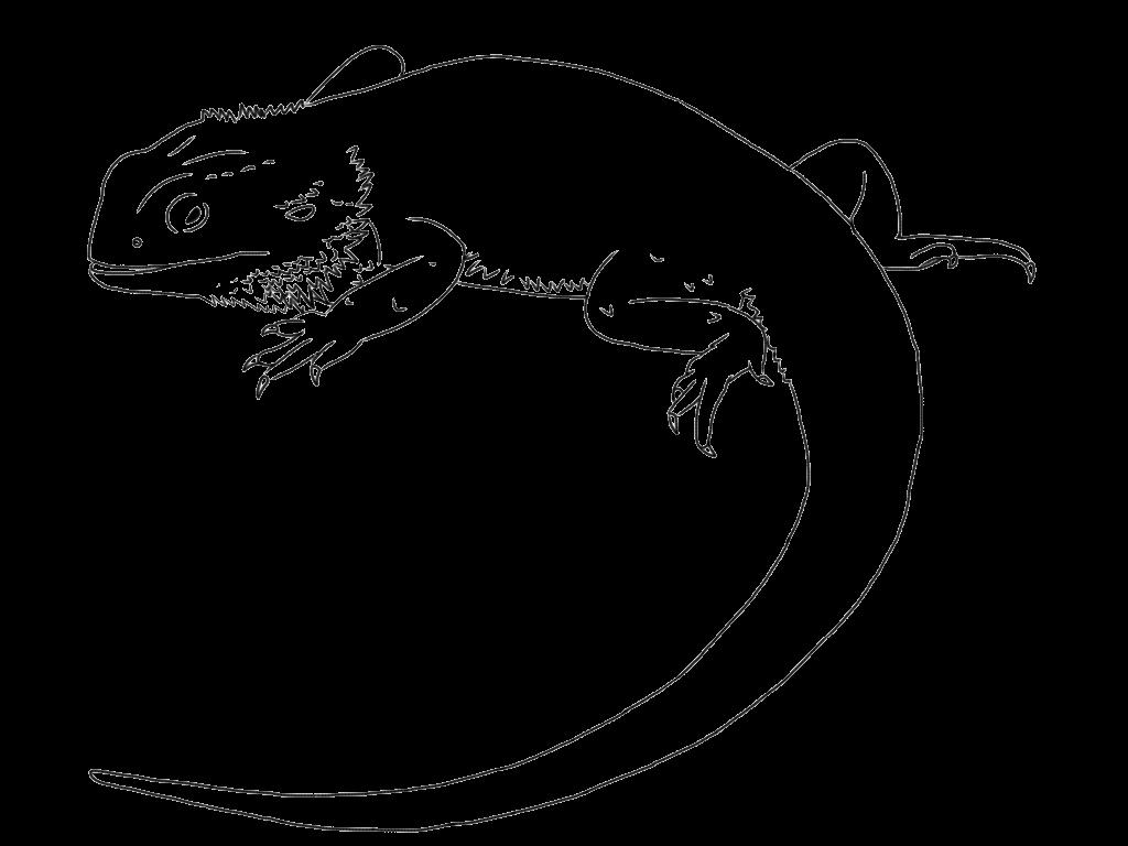 Image Result For Bearded Dragon Line Art