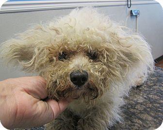 Kyle Adoptapet Com Toy Poodle Poodle Pet Adoption