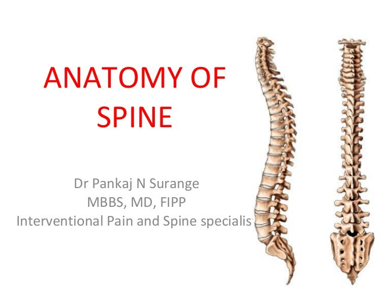 anatomy-of-spine by Interventional pain and spine Centre via Slideshare