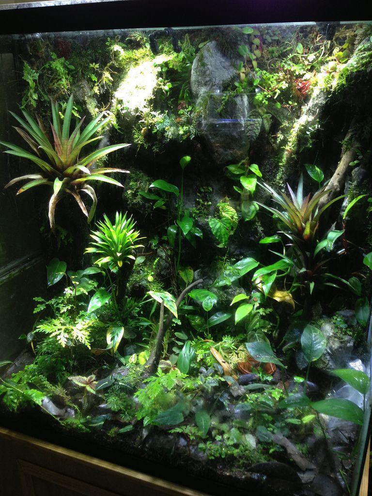 Micro mega vivarium terraria and aquariums