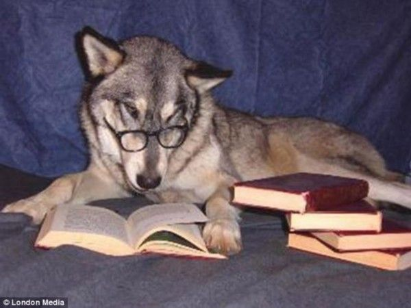 Some cute pets love to learn