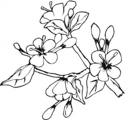 Planse Primavara Ghioceii Flori Primavara Flori Primăvară Desene