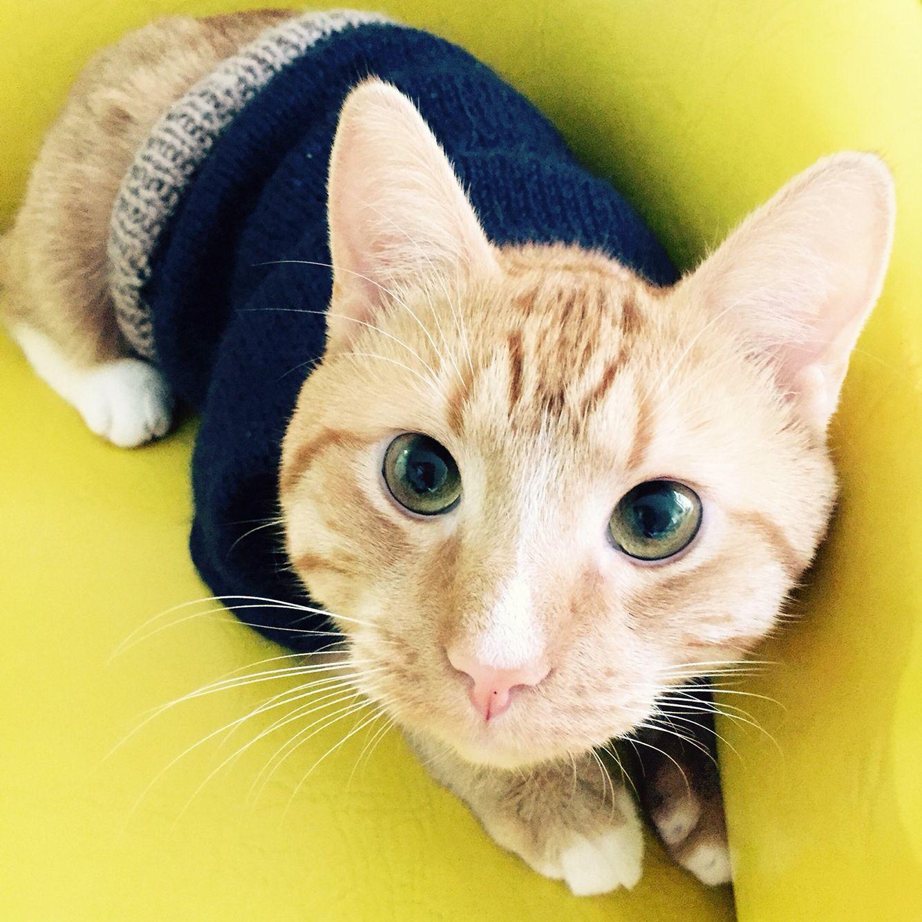 Kitten Wear Cat Jumper Kitty Sweater Kitten Cats Kitty