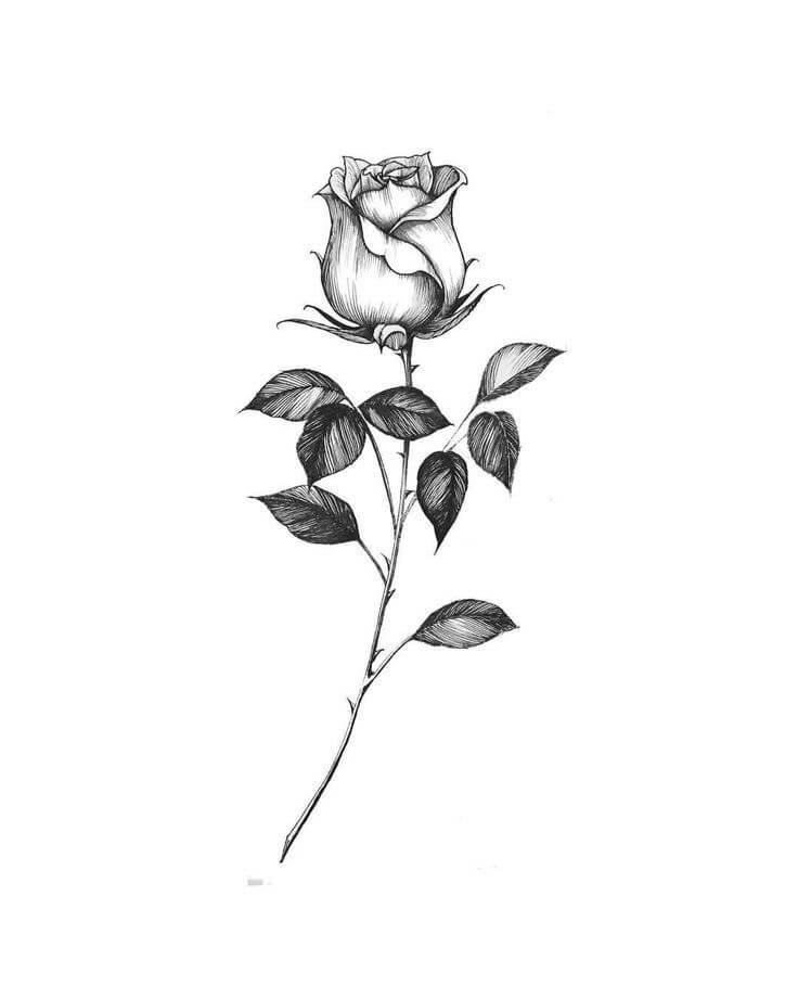 2020 Glamour And Eye Catching 30 Rose Tattoos Design Diagram Ideas 2020 Glamour And Eye Catch White Rose Tattoos Realistic Rose Tattoo Rose Tattoos For Men