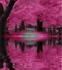 Hot pink trees.