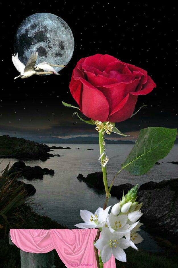 Картинка спокойной ночи из роз
