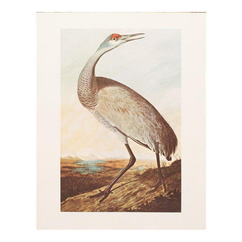 1966 Audubon Sandhill Crane Lithograph John James Audubon Bird