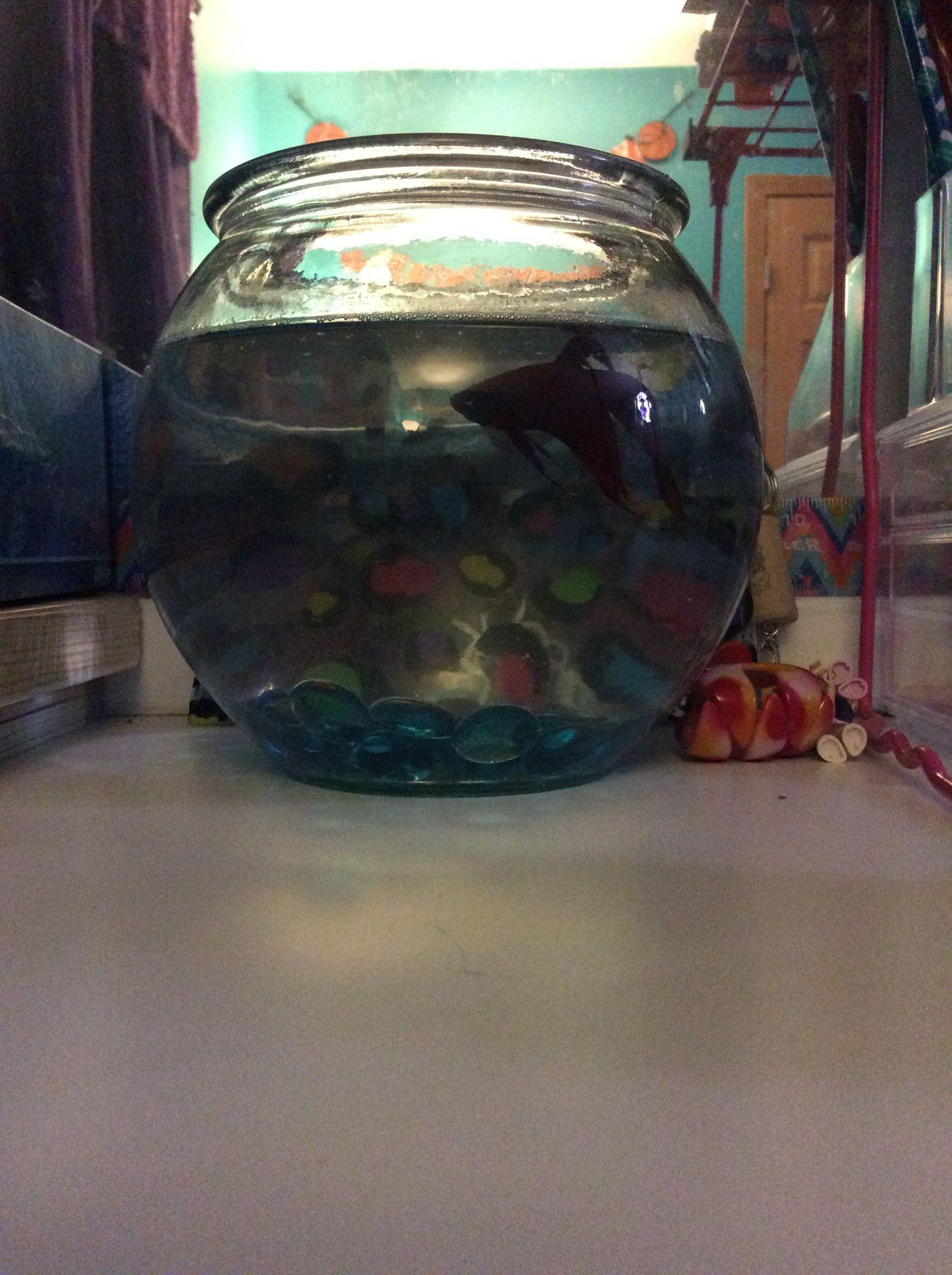 The Cutest Fish I ever had!