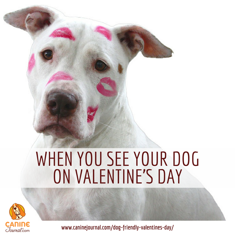 16 Super Sweet Memes On Animals Celebrating Valentine S Day Cute Animals Animals Kissing Cute Animals Kissing