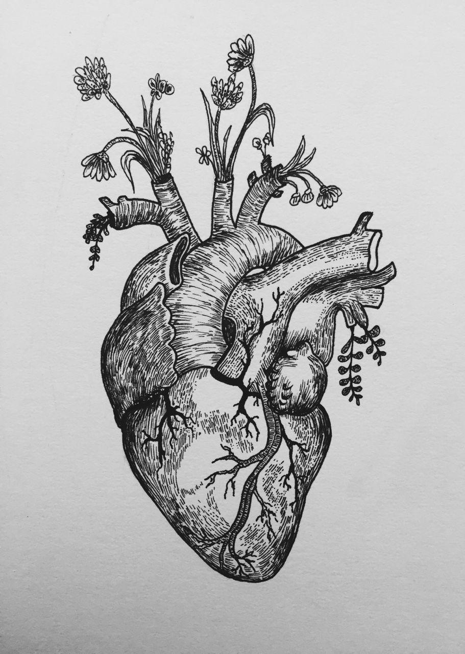 Black And White Heart Tattoo : black, white, heart, tattoo, Biology-tattoo, Tumblr, Tattoos,, Anatomical, Heart, Tattoo,, Drawing