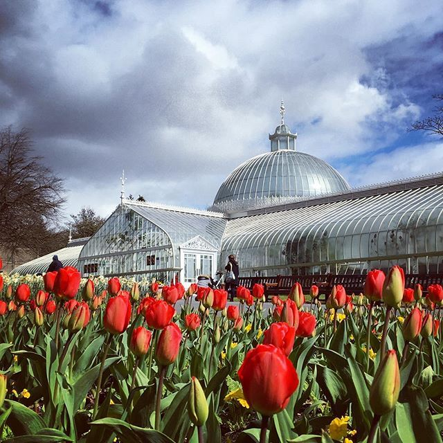 Conservatory and tulips at the Glasgow Botanic Garden ...