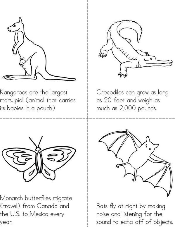 Animal Facts Mini Book