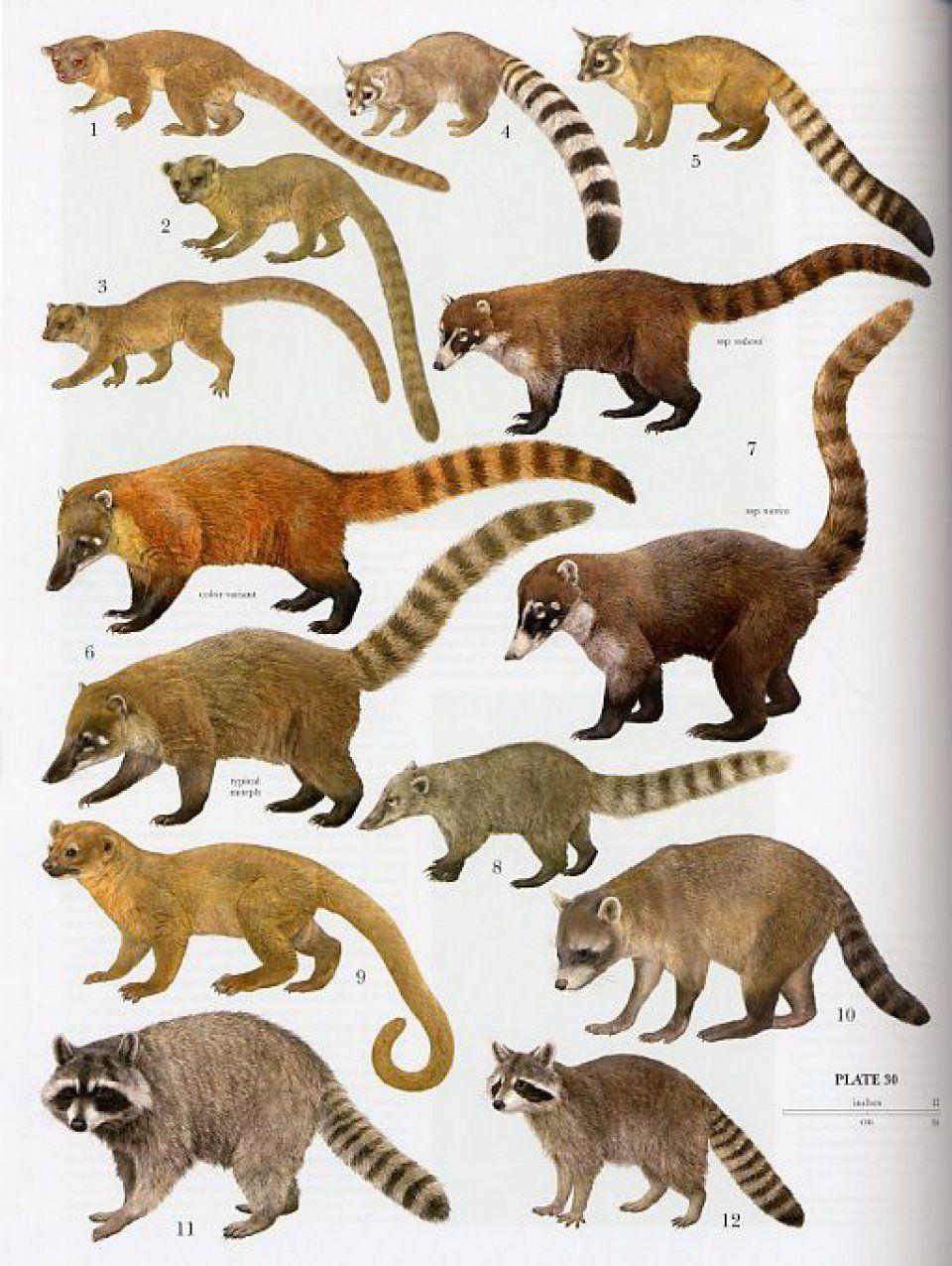 Series: Handbook of Marine Mammals