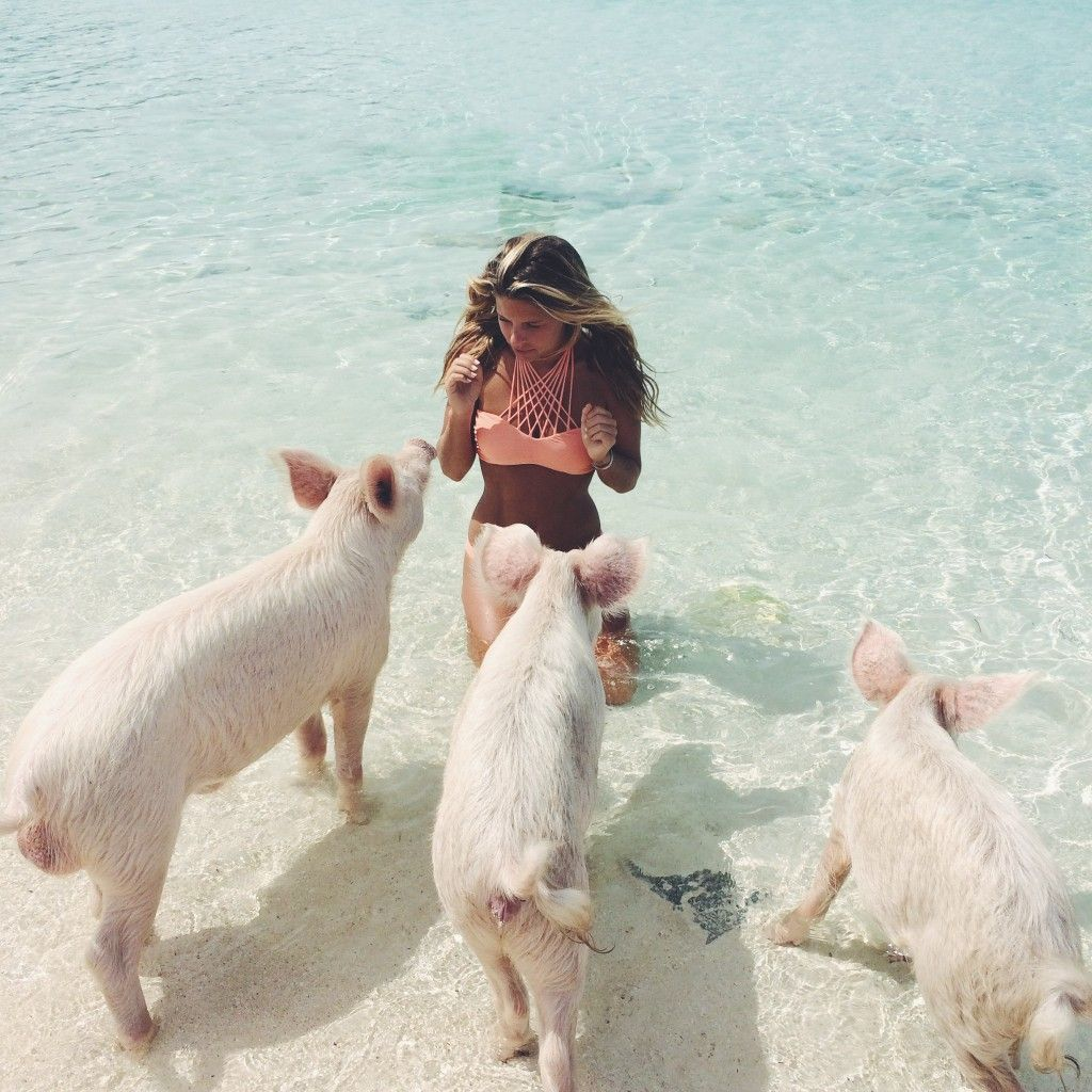"Visit ""pig Island"" And Swim With The Pis. Bahamas"
