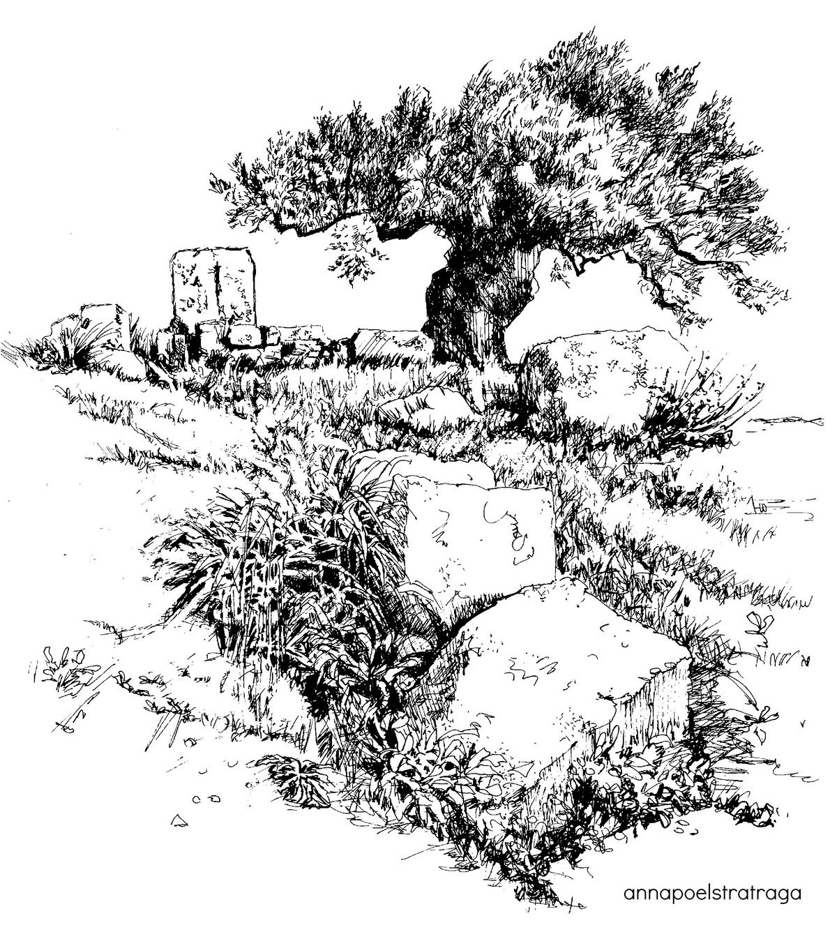 Ancient Sparta Ruins & Olive Tree Pen & ink Drawing by