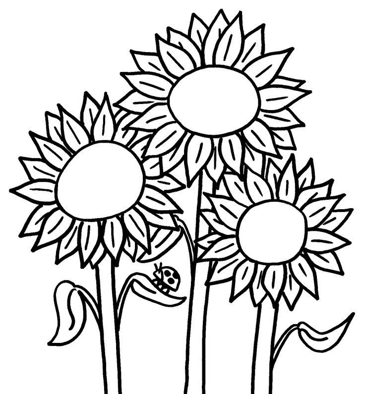 sunflower coloring pages for kids printable coloring pages - Sunflower Coloring Pages Kids