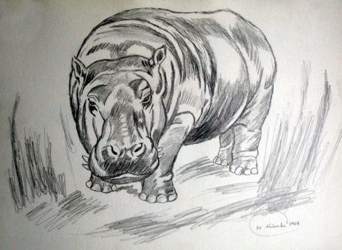 dibujos a lapizde un hipopotamo  Buscar con Google  Dibujo