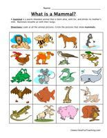 mammal classification this site has all the animal groups plus great phonics math worksheets. Black Bedroom Furniture Sets. Home Design Ideas