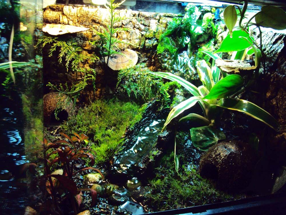 Image result for vivarium for frogs diy projects for Fish tank frogs