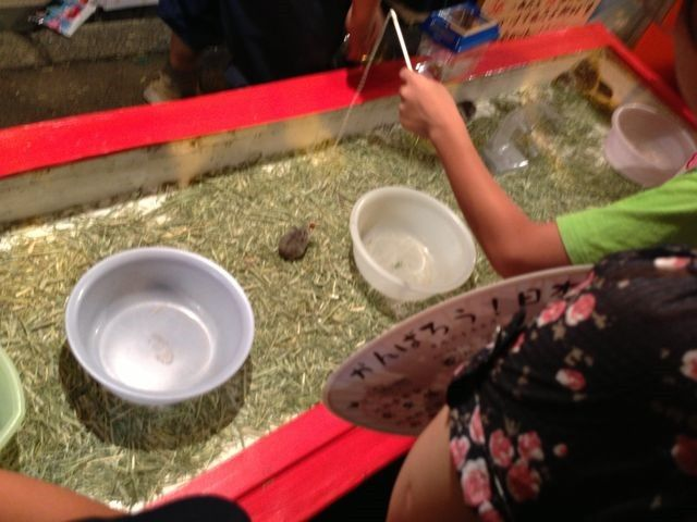 hamster-fishing 大阪府大阪市平野区の杭全神社の夏祭り:ハムスター釣り