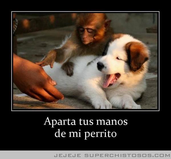 Aparta Tus Manos De Mi Perrito Funny Animal Pictures Funny Animals Cute Animals