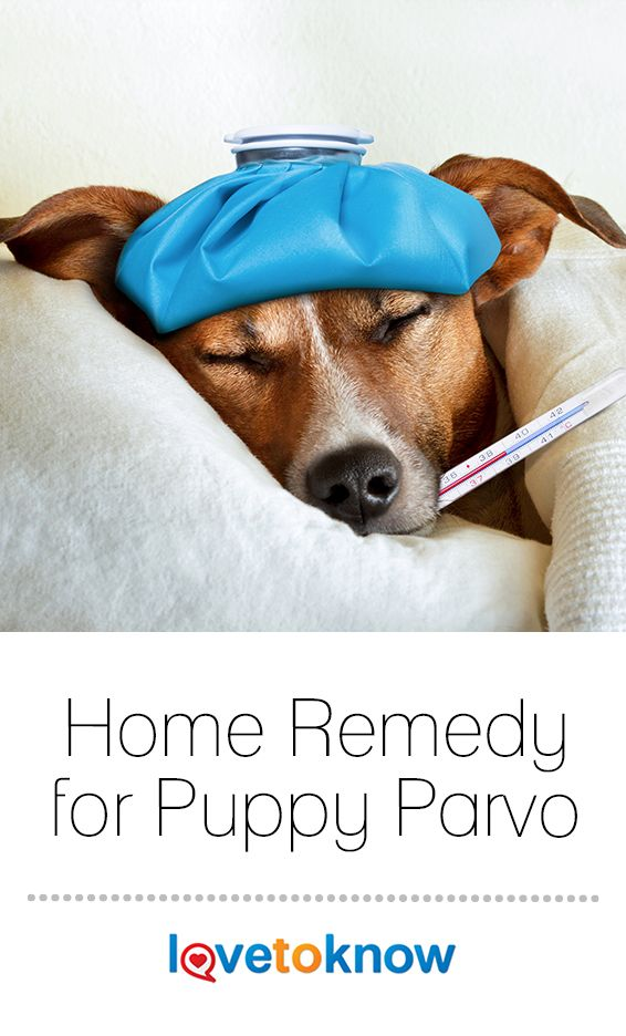 Home Remedy for Puppy Parvo (With images) Cat care