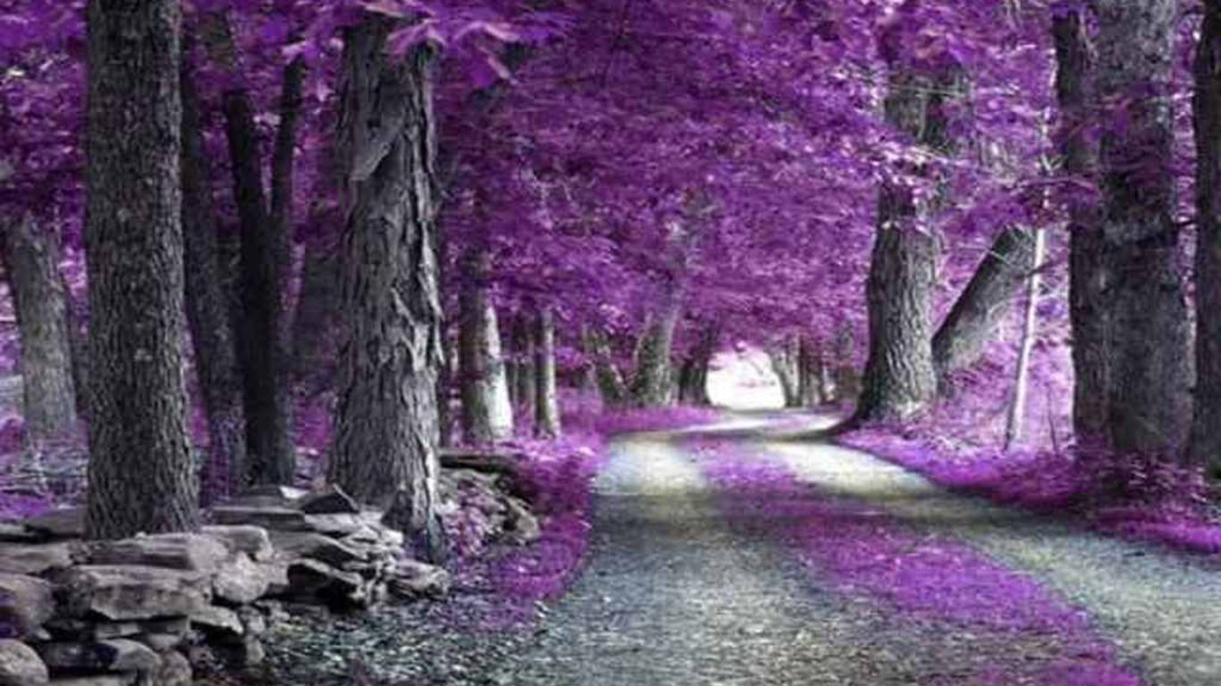 Purple Nature Wallpaper Computer Best Image Background