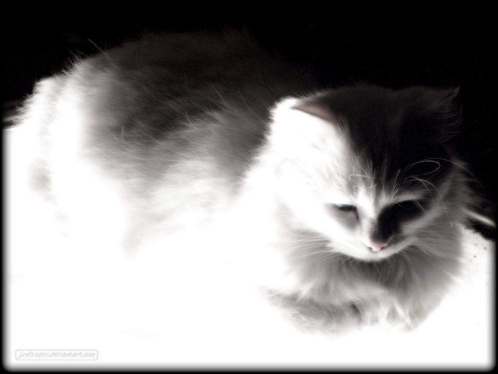 White fluff  by ~junfender