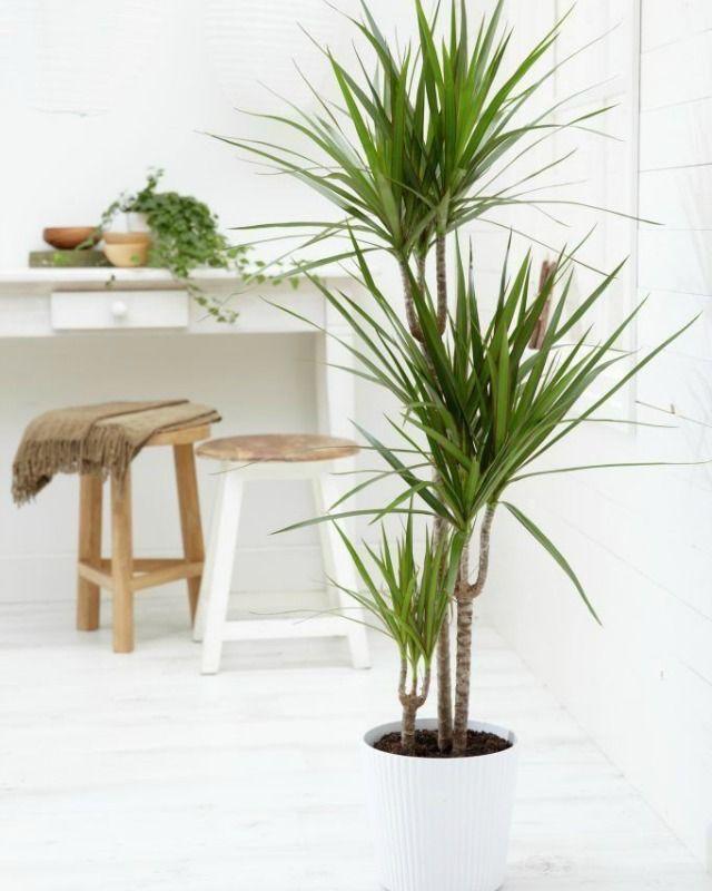 Decoracion facil 10 mejores plantas de interior for Mejores plantas para interior