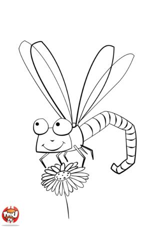 Coloriage libellule et fleur coloriage pinterest - Photo de libellule a imprimer ...