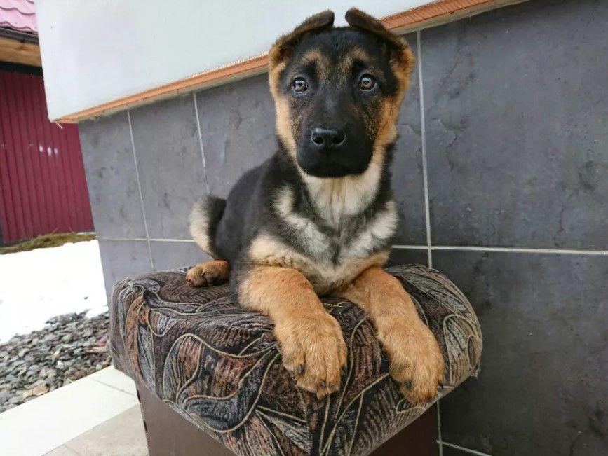 50 Unique Female Dog Names Female Dog Names Puppies Names Female Dog Names Unique